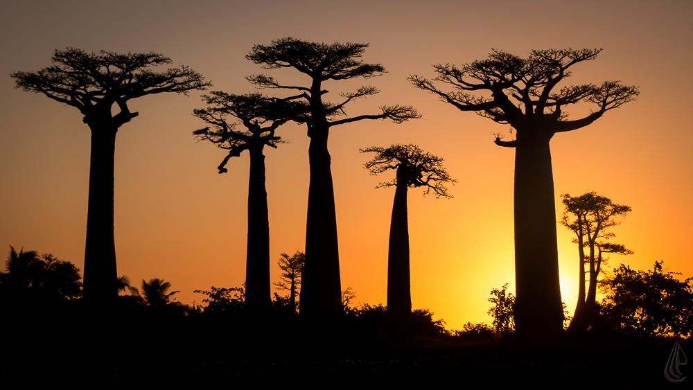 all e des baobabs photographe professionnel aix en provence. Black Bedroom Furniture Sets. Home Design Ideas